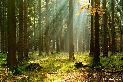Wald mit Sonnenstrahlen - Kraft der inneren Bilder - Christoph Schlick